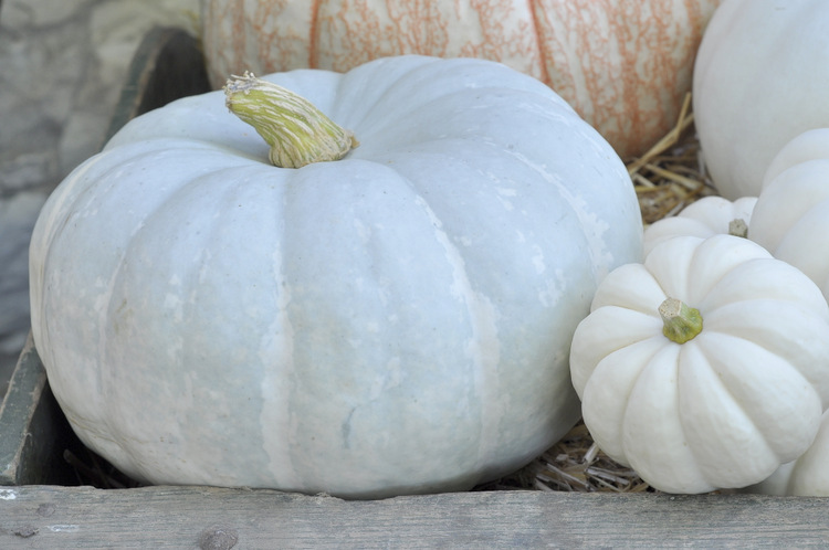 I love that pumpkins can also be whimsical and blue!